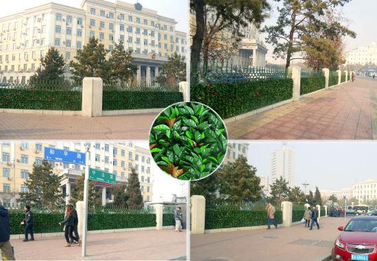 黑龙江省政府围墙护栏给哈尔滨的冬天带来一抹绿意